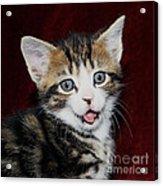 Rude Kitten Acrylic Print