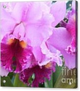 Ruffled Orchids Acrylic Print
