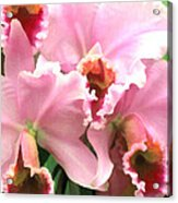 Ruffles And Flourishes Cattleya Orchids Acrylic Print