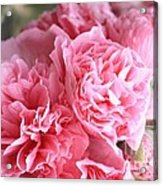Ruffly Pink Hollyhock Acrylic Print