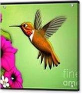 Rufus Hummingbird Acrylic Print