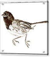 Running Bird Acrylic Print by Susan Leggett