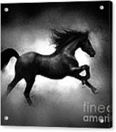 Running Horse Acrylic Print by Robert Foster