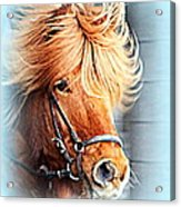 Running In The Fields, Waving My Golden Mane  Acrylic Print