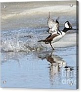 Running On Water Acrylic Print
