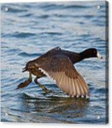 Running On Water Series 6 Acrylic Print