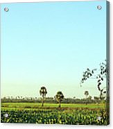 Rural Cambodia Acrylic Print