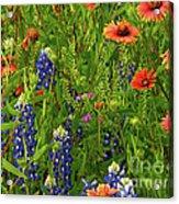 Rural Color Acrylic Print
