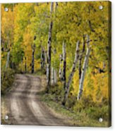 Rural Forest Service Road Acrylic Print