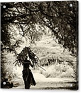 Rural Indian Village Life Acrylic Print by Tim Gainey