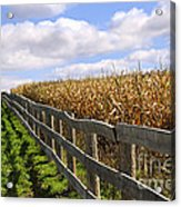 Rural Landscape With Fence Acrylic Print