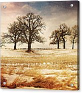 Rural Oaks Acrylic Print