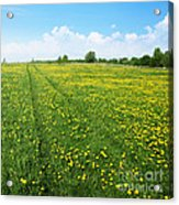 Rural Road Flower Acrylic Print by Boon Mee