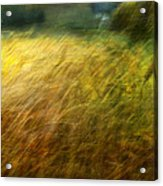 Ruralscape #8. Field And Wind Acrylic Print