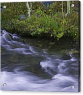 Rushing Stream And Creek Bank - Eastern Sierra Acrylic Print