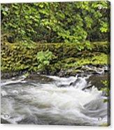 Rushing Water At Cedar Creek Washington State Acrylic Print