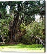 Ruskin Oak - Ocean Springs Acrylic Print