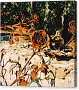 Rust And Roses Acrylic Print