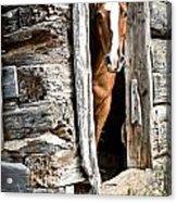 Rustic Horse Scene Acrylic Print