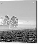 Rustic Morning In Black And White Acrylic Print