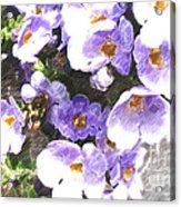 Rustic Planter Box Acrylic Print