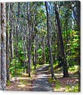 Rustic Trail Acrylic Print