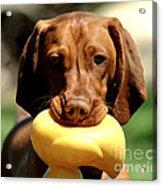 Rusty Has A Duck Acrylic Print