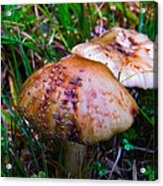 Rusty Mushroom Acrylic Print