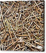 Rusty Nails Acrylic Print