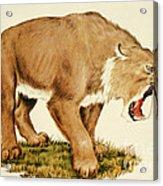 Sabretooth Cat Acrylic Print