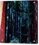 Sacred Space Acrylic Print