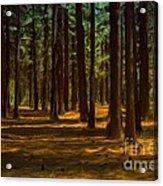 Sacred Warrior Grove Acrylic Print