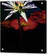 Sacred Water Lilies Acrylic Print