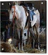 Sad Horse Acrylic Print