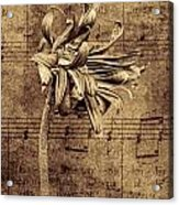 Sad Song In Sepia Acrylic Print