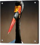 Saddle-billed Stork Portrait Acrylic Print