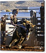 Saddle Bronc Riding Competition Acrylic Print