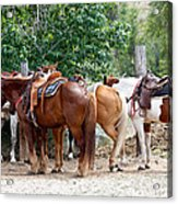 Saddled Acrylic Print