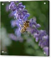 Sage Bee Acrylic Print