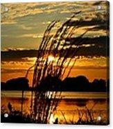 Sage Grass Sunset Acrylic Print