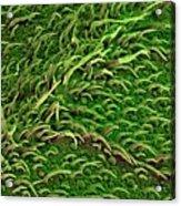 Sage Leaf Acrylic Print
