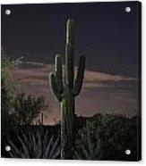 Saguaro At Sunset Acrylic Print