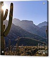 Saguaro Cacti And Catalina Mountains Acrylic Print