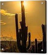 Saguaro Cactus 3 Acrylic Print
