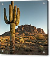 Saguaro Cactus And Superstition Acrylic Print