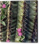 Saguaro Cactus And Wildflowers Acrylic Print