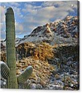 Saguaro National Park Winter Morning Acrylic Print