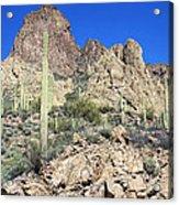 Saguaro On The Apache Trail Acrylic Print