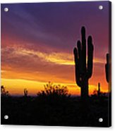 Saguaro Sunset II  Acrylic Print