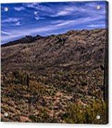 Saguaro View No.1 Acrylic Print